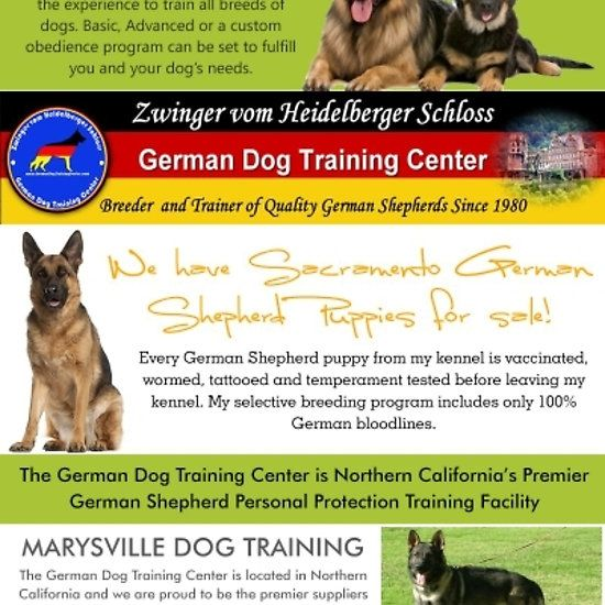 Marysville German Shepherd Breeder German Shepherd Breeders