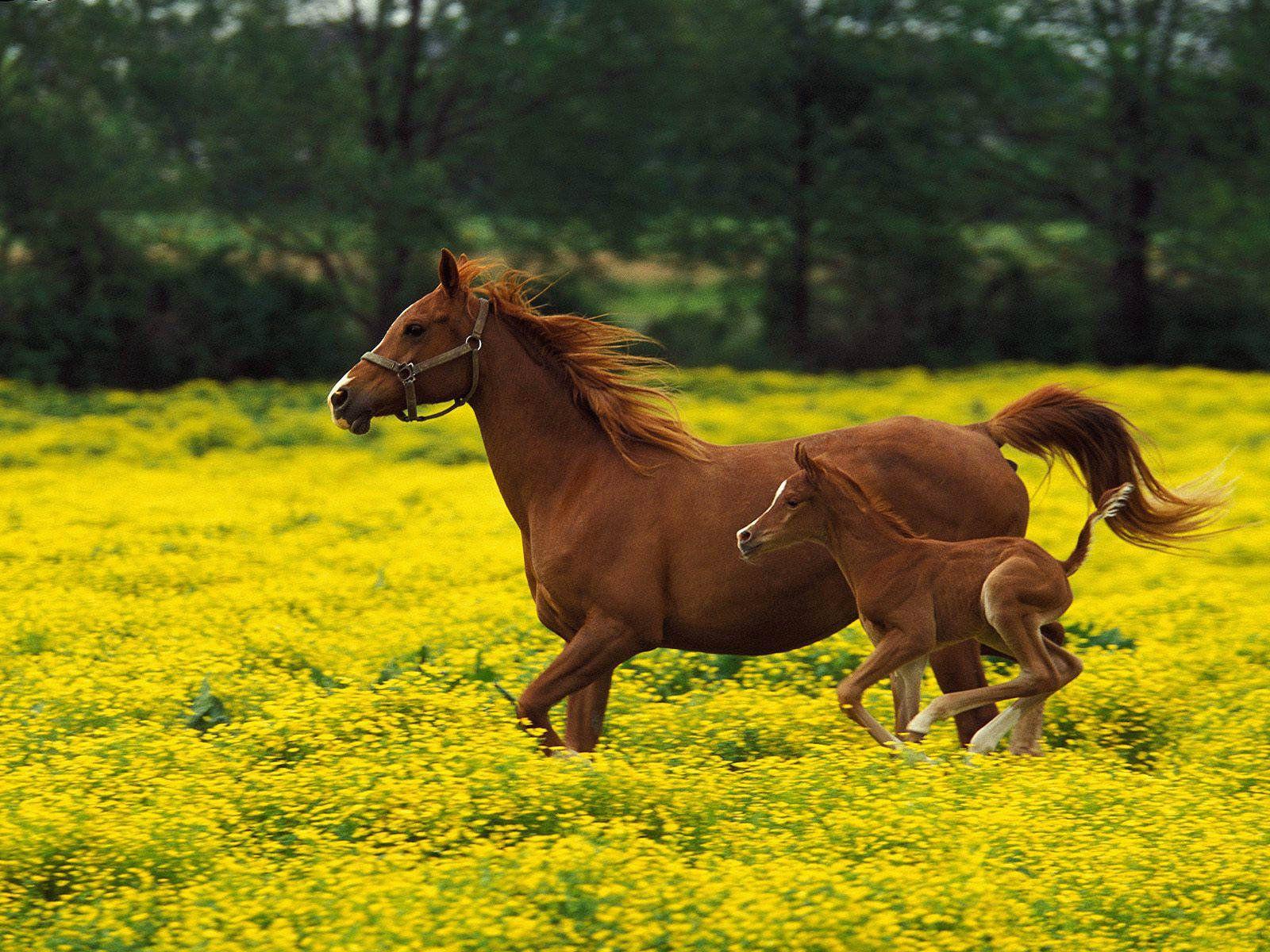 Beautiful Wallpaper Horse Yellow - 5fe5ca7d8b42b9bdd95058dd8afb6c55  Graphic_644964.jpg