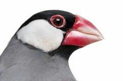 Pin De Tomas Hardy En Beautiful Birds Pajaros