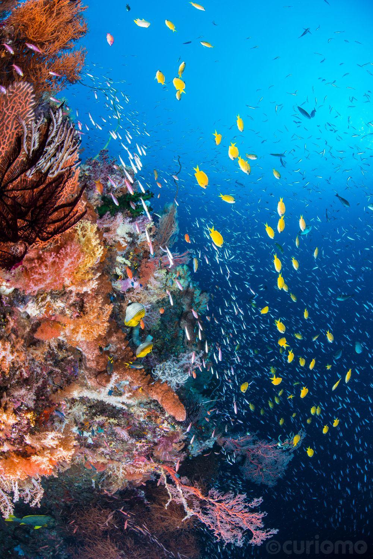 A pinnacle at Four Kings dive site - Halmahera Sea, Misool, Indonesia