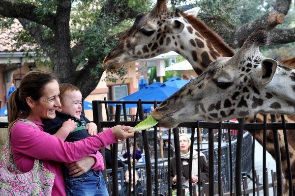 Houston Zoo Beat The Crowds Stay Cool Keep It Fresh Jillbjarvis Com Houston Zoo Zoo Stay Cool