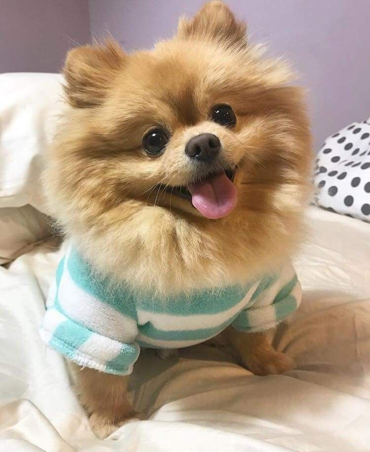 Pin von Michi Allen auf fluffy dogs