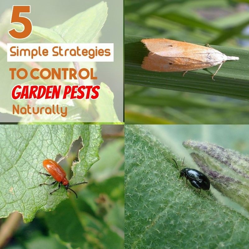 With A Simple Change Of Chemical Pesticides To The Natural Pest Control Of The Garden You Will Soon Notice That Natural Methods Are Garden Pests Pest Control Organic Gardening