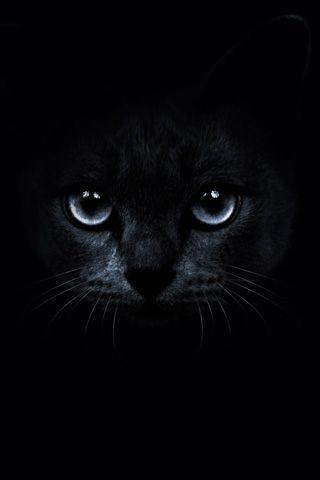 Black Cat Background Animal Magnetism Cats Cat Background