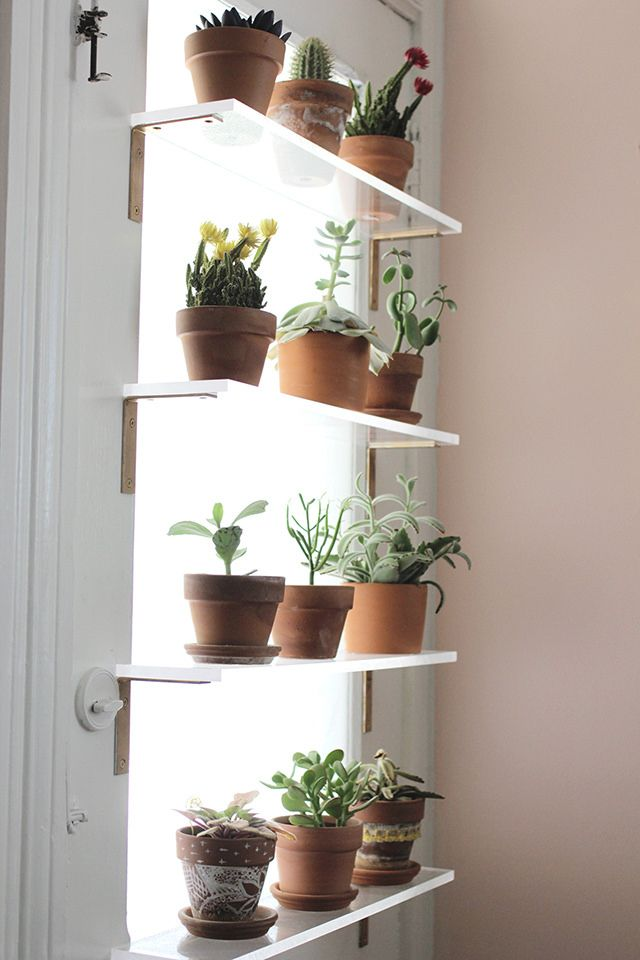 Styling Plants Around The Home H O M E In 2019 Herb