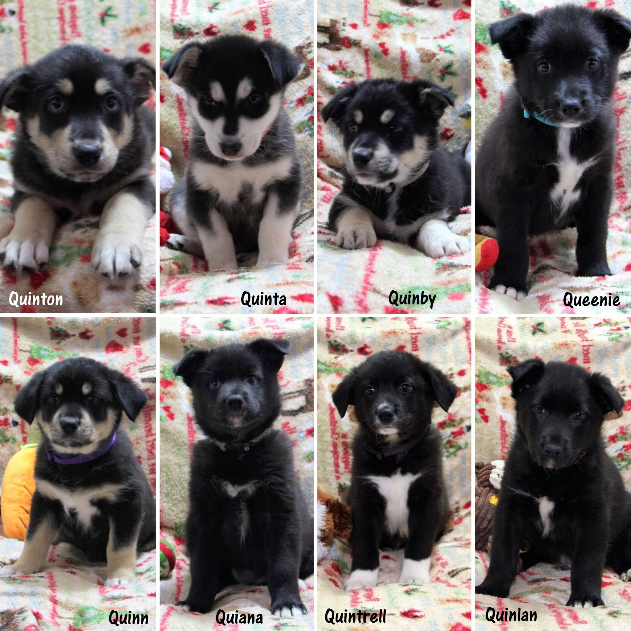The Q Litter Is Now Available For Adoption With Images Cat