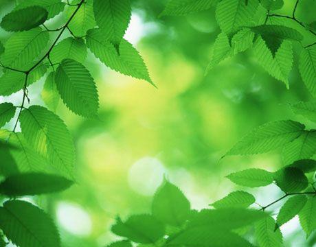 Sunny days make beautiful green leaves glow!