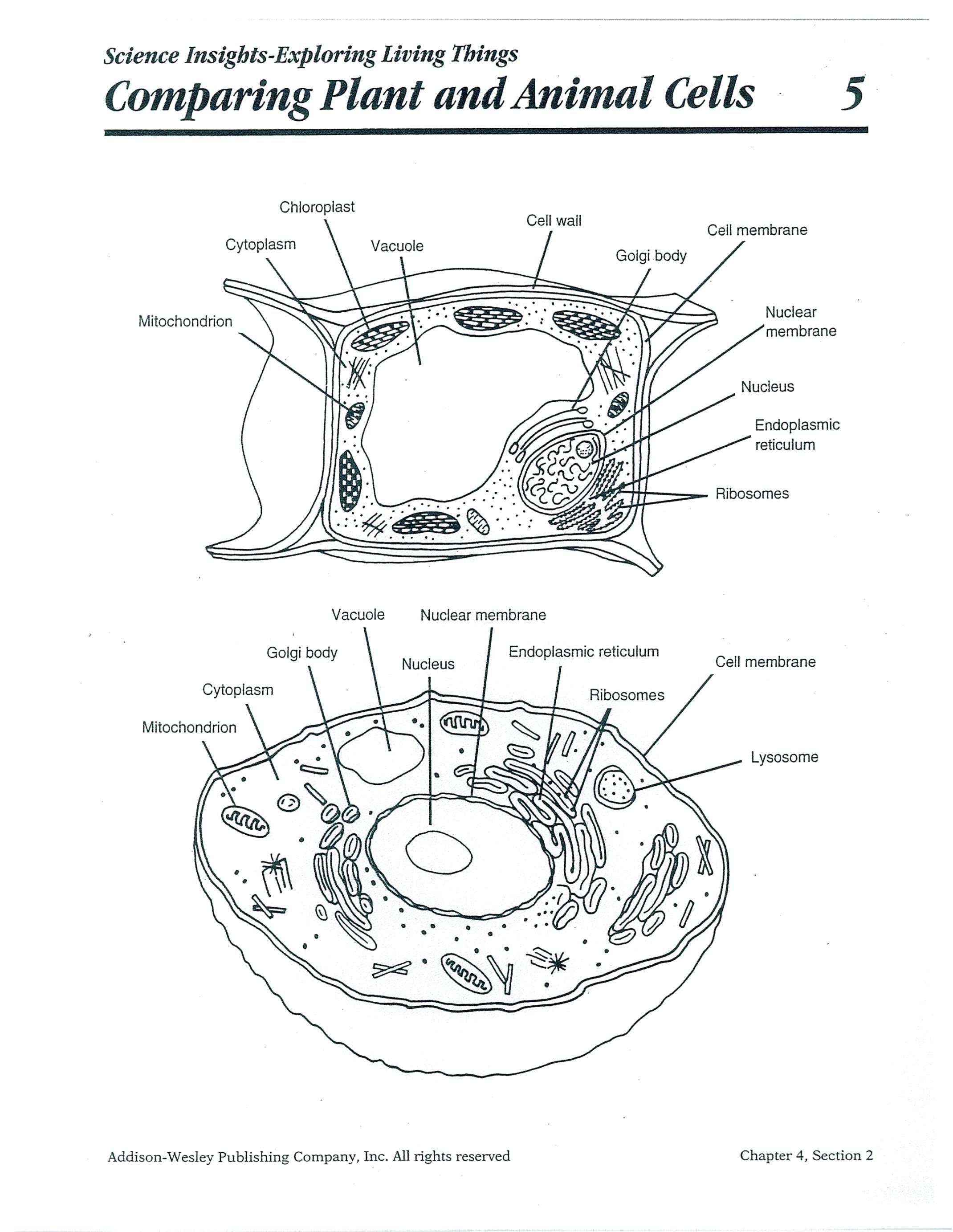 33 Simple Water Cycle Worksheet Design Http Ygdravil Info 33 Simple Water Cycle Worksheet Desi Cells Worksheet Plant And Animal Cells Plant Cells Worksheet [ 2766 x 2140 Pixel ]