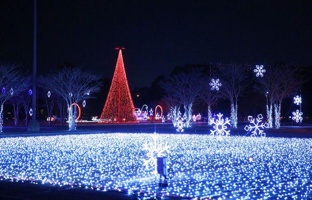 Coney Island Christmas.Coney Island Cincinnati Christmas Light Show Things To
