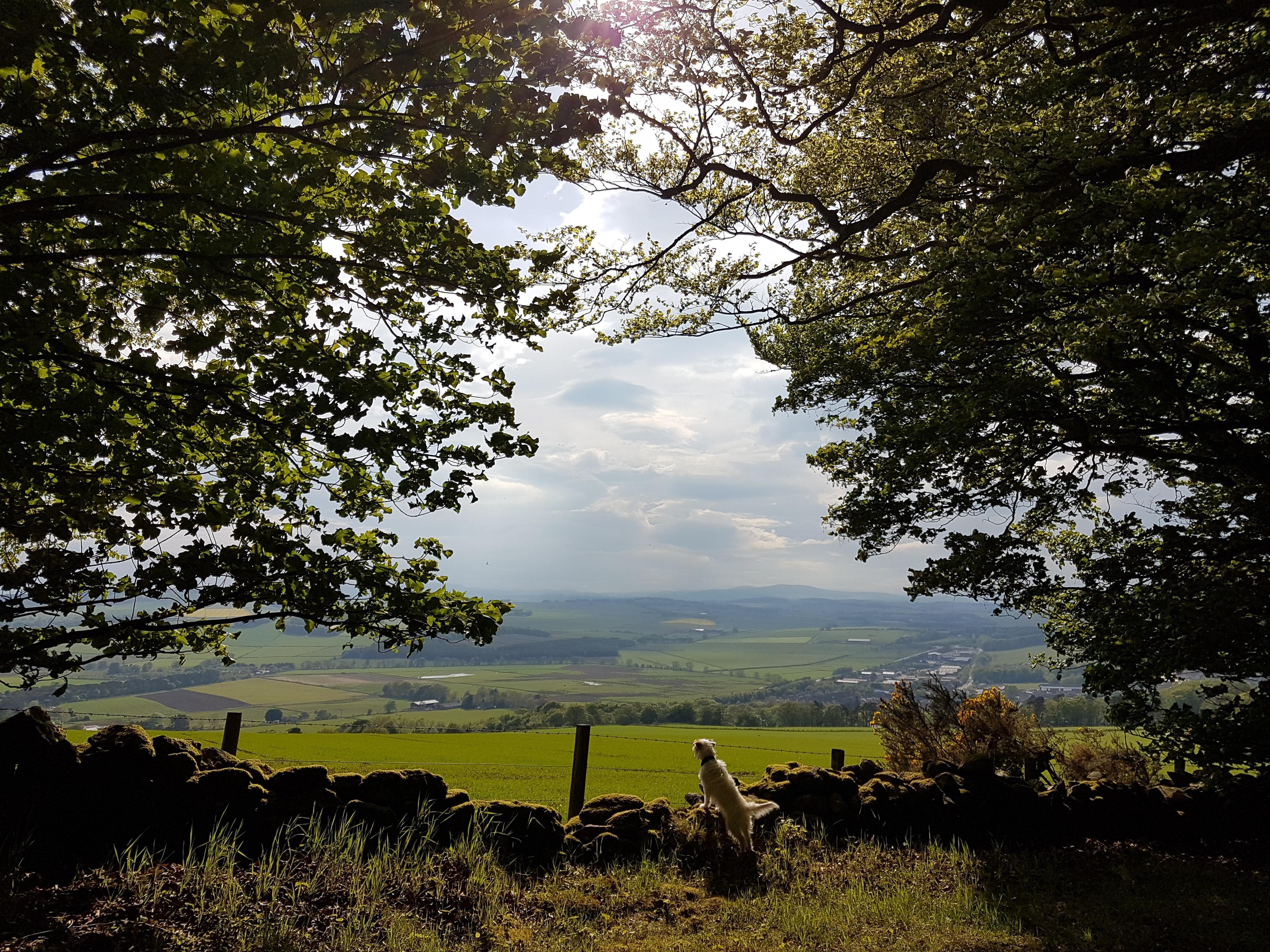 Unedited Pic From The Edge Of Kirkhill Forest Aberdeenshire 40323024 Oc Https Ift Tt 2tnmsj7 Forest Aberdeenshire Pics