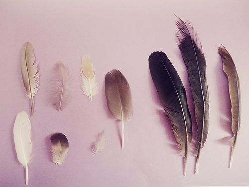 Feather River College: I was inspired and encouraged with each feather I added to my collection.