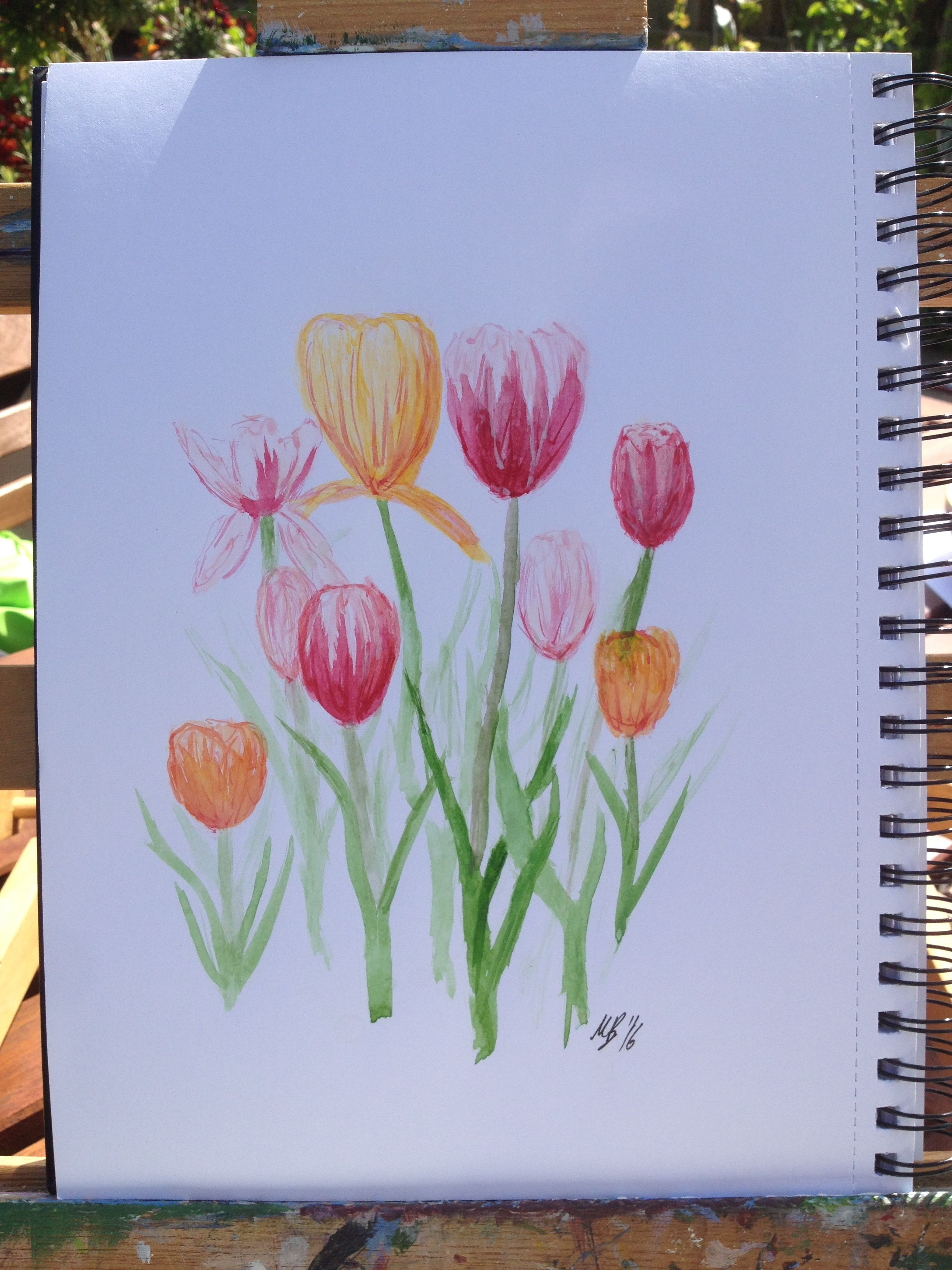 Tulips - outdoor water colour sketch
