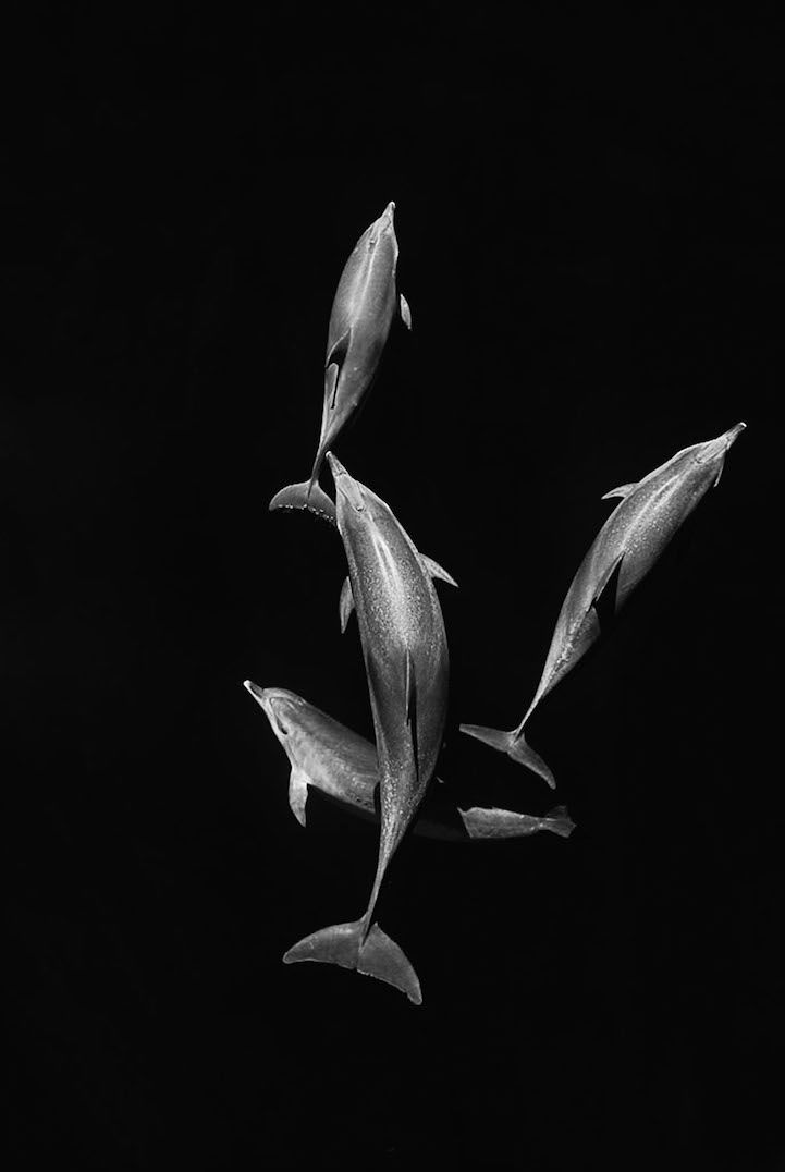 Interview: Christopher Swann Captures Whales and Dolphins in All Their Glory - My Modern Met