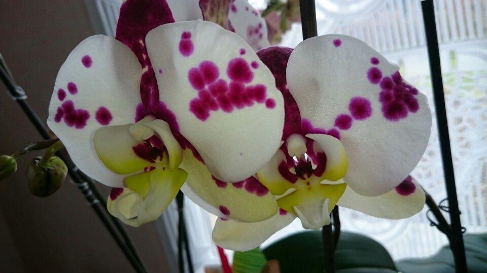 Orchidées de 2014