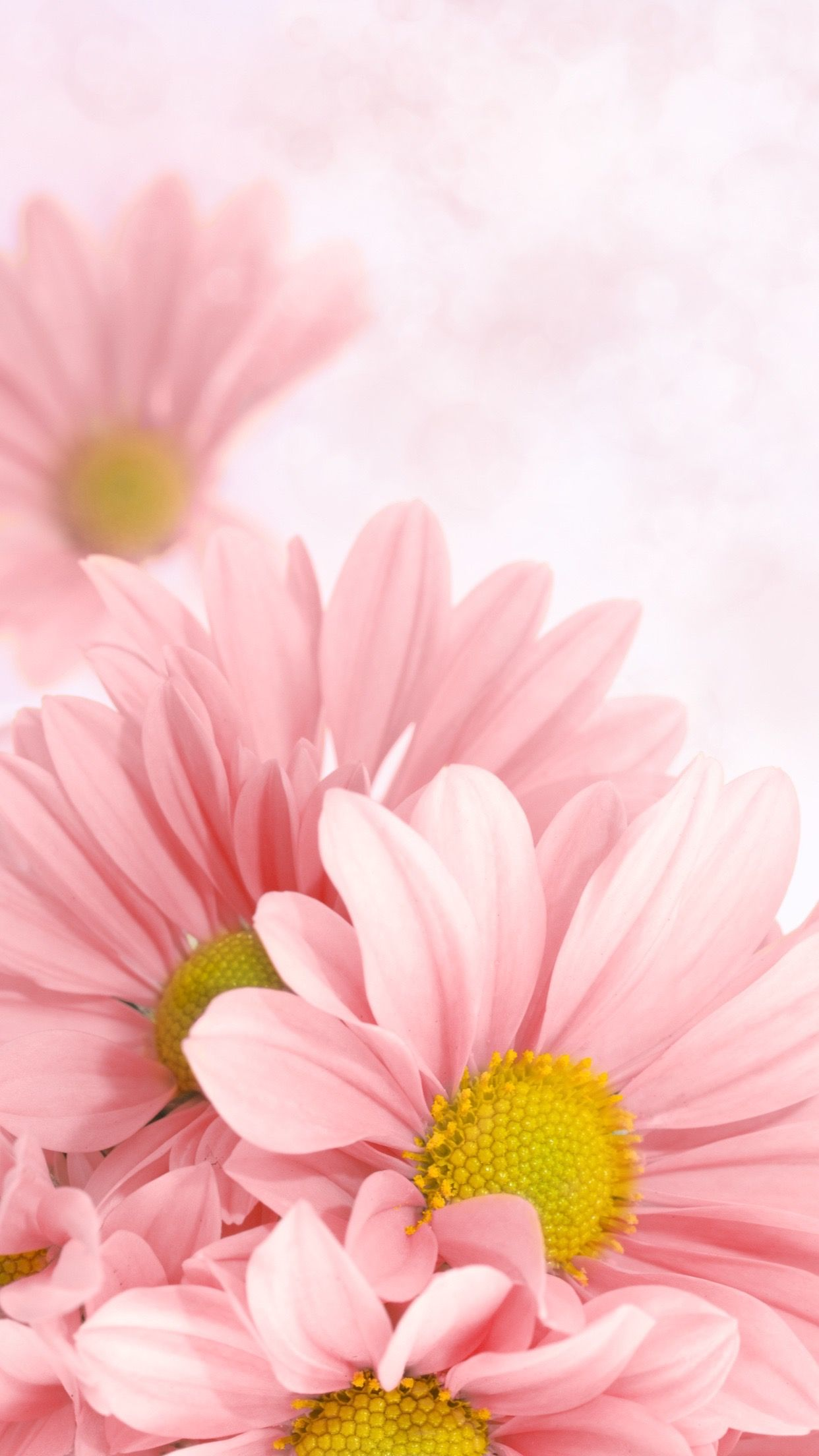Pink Flowers Wallpapers Pinterest Flower Wallpaper And Flowers