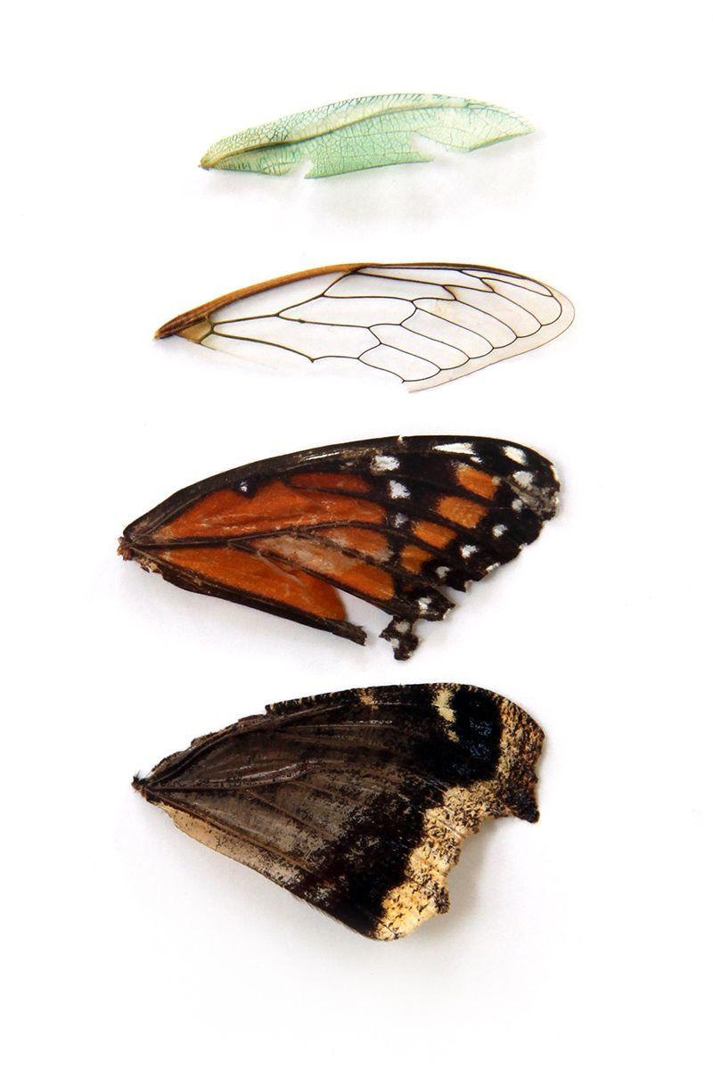 wings (mary jo hoffman)