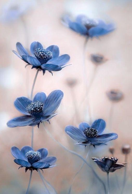 Lovely #blueflowerwallpaper