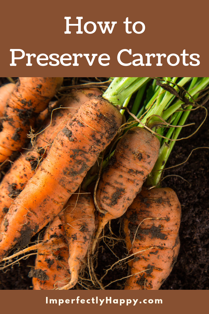 How To Preserve Carrots From Your Garden Or Store 640 x 480