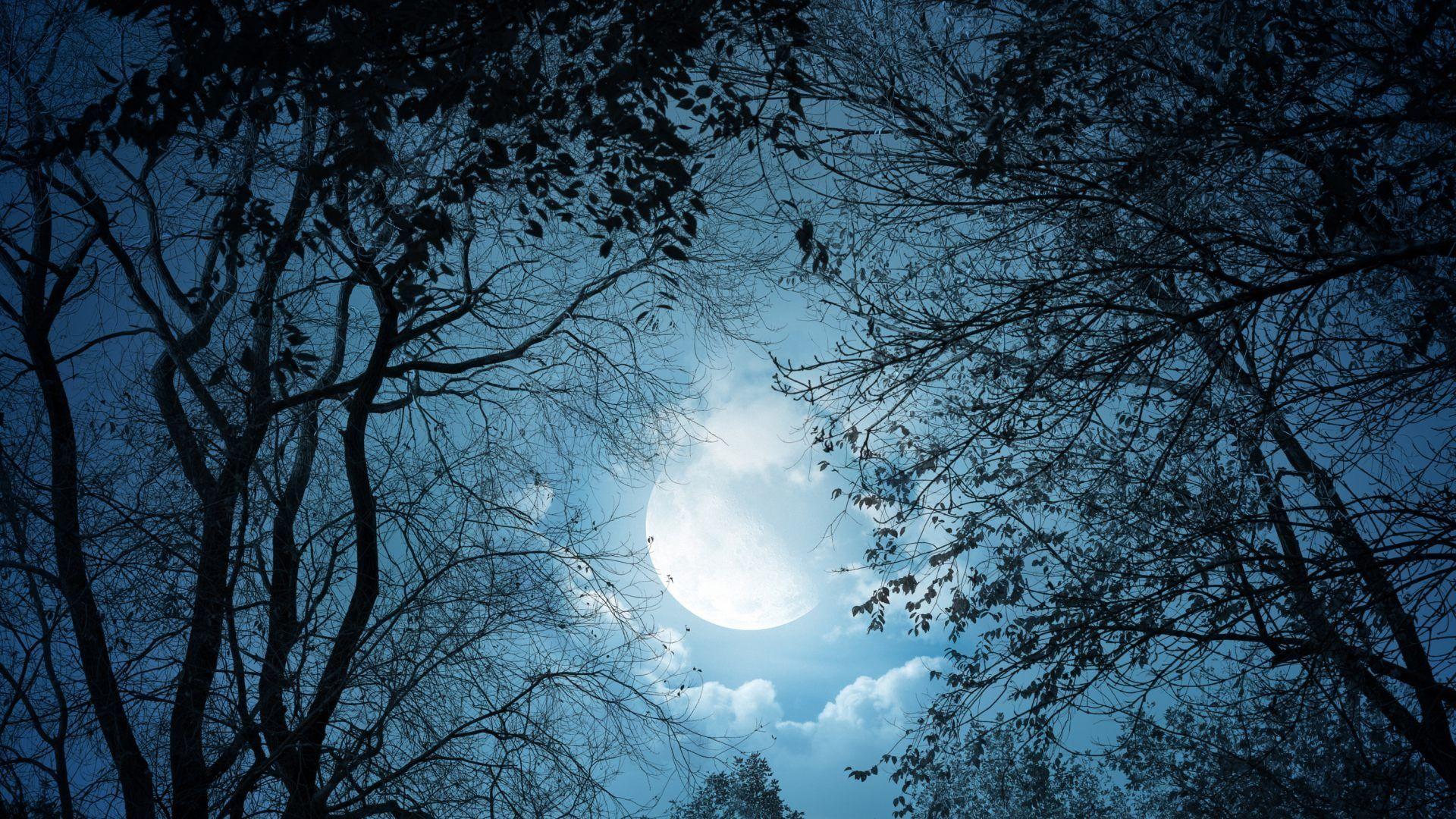 """""""Si lloras por haber perdido el sol, las lagrimas no te dejaran ver las estrellas""""....rabindranath tagore"""