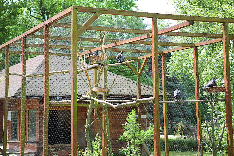 Siatki Szesciokatne Heksagonalne Hodowlane Woliery Ocynkowane Lub Ocynkowane I Powlekane Pcv Oczka 13x13 19x19 2 Outdoor Outdoor Structures Greenhouse