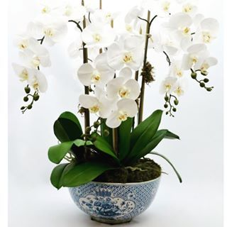 Which Would You Choose A Very Exciting Edition The Enchanted Home Orchid Flower Arrangements Orchid Arrangements Silk Orchids Arrangements