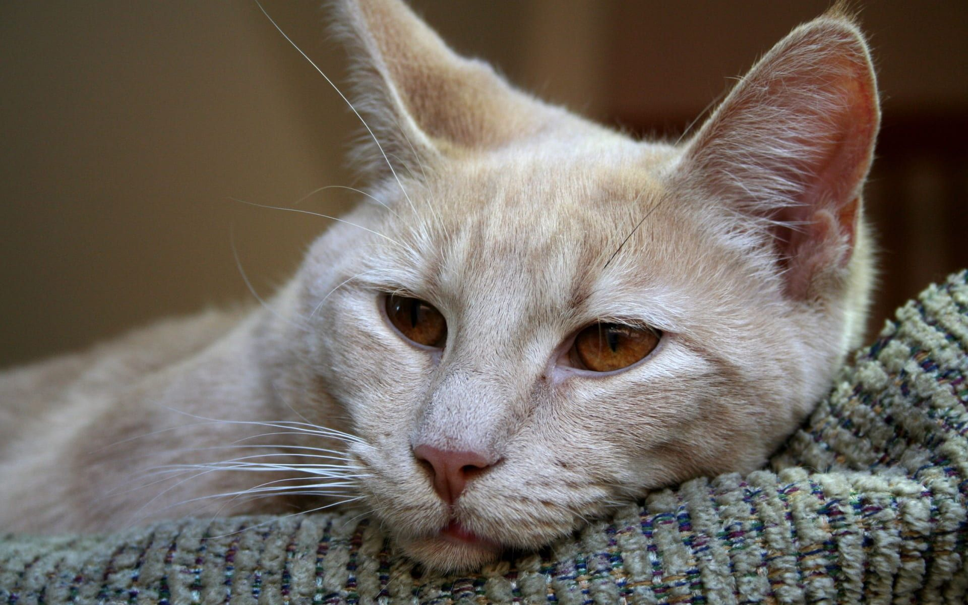 3 Tips to End Cat Puking for Good Sick cat, Cats, Down