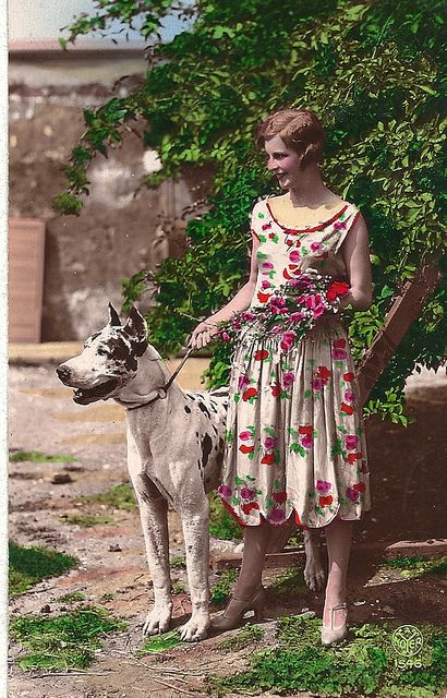 1930 S Postcard Great Dane Dogs Vintage Dog Famous Dogs