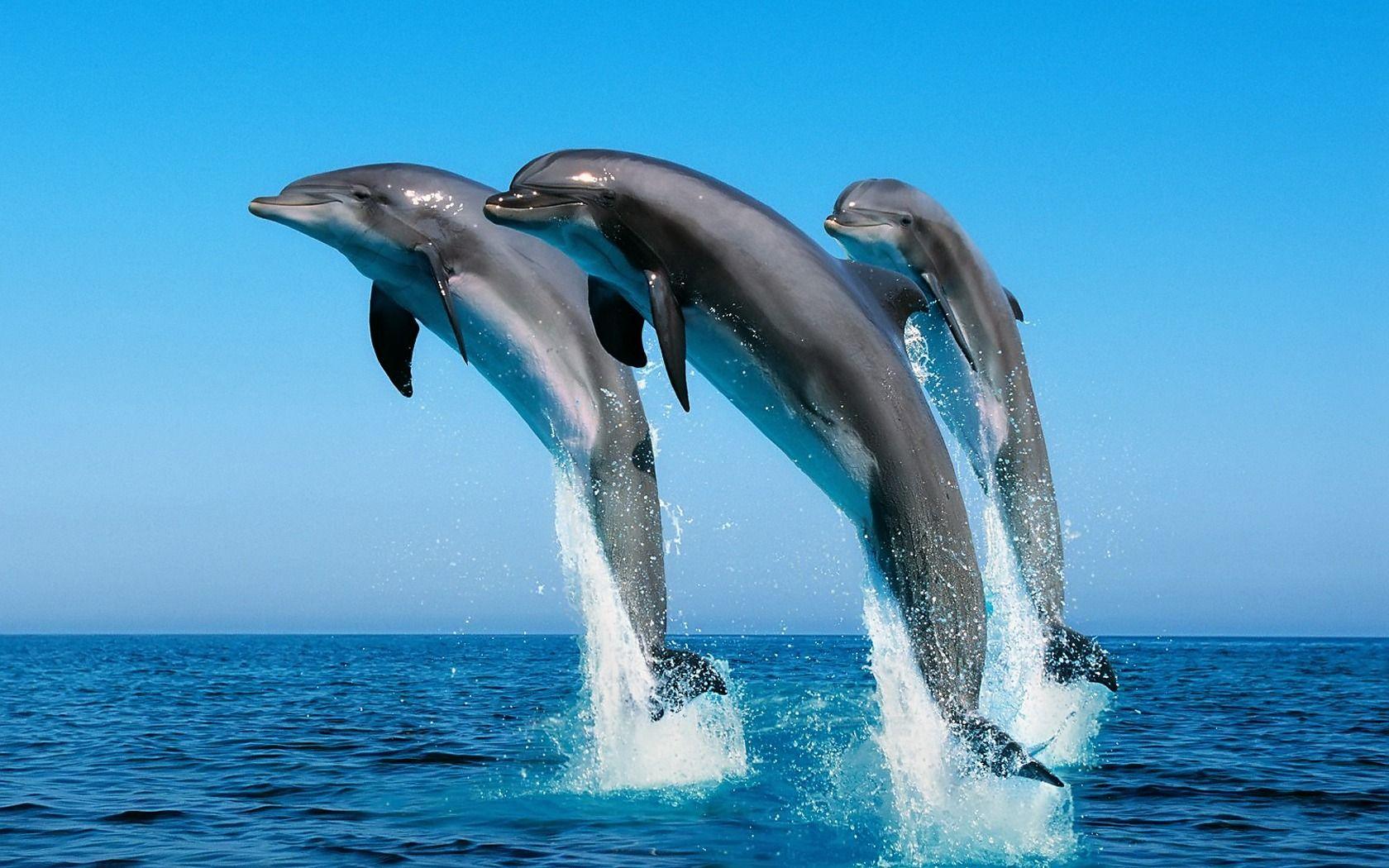 Grandes animales HD   Animales, Delfines en el mar y Delfines