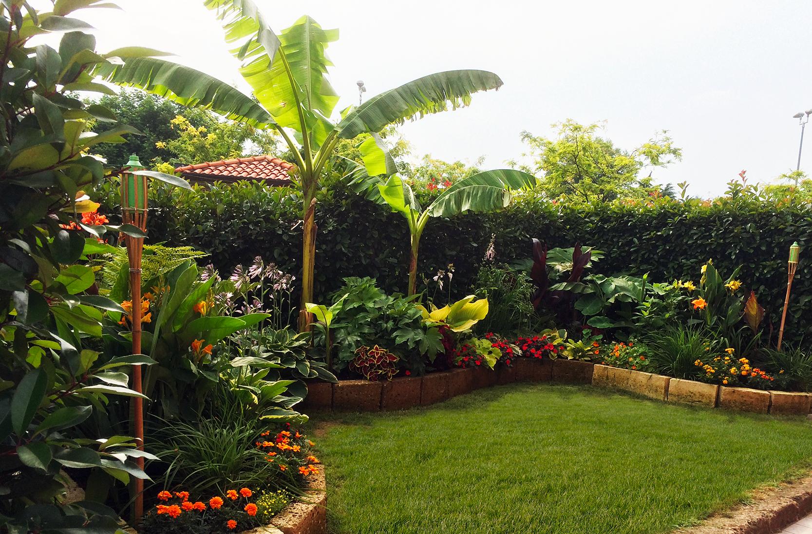 My Little Tropical Garden Il Mio Piccolo Giardino