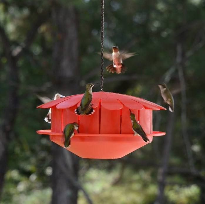 How Cool Is This Feed Hummingbirds Without Messy Nectar Protein Hummingbird Feeder Humming Bird Feeders Feed Hummingbirds Glass Hummingbird Feeders