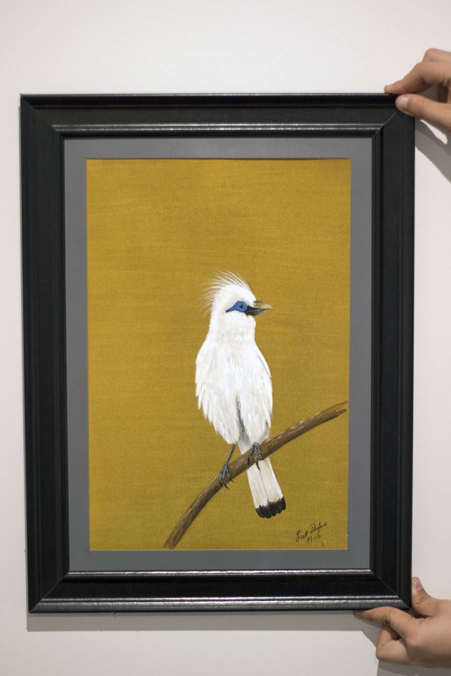 Bali Myna Original Art - Gouache and Watercolor Balinese Bird ...