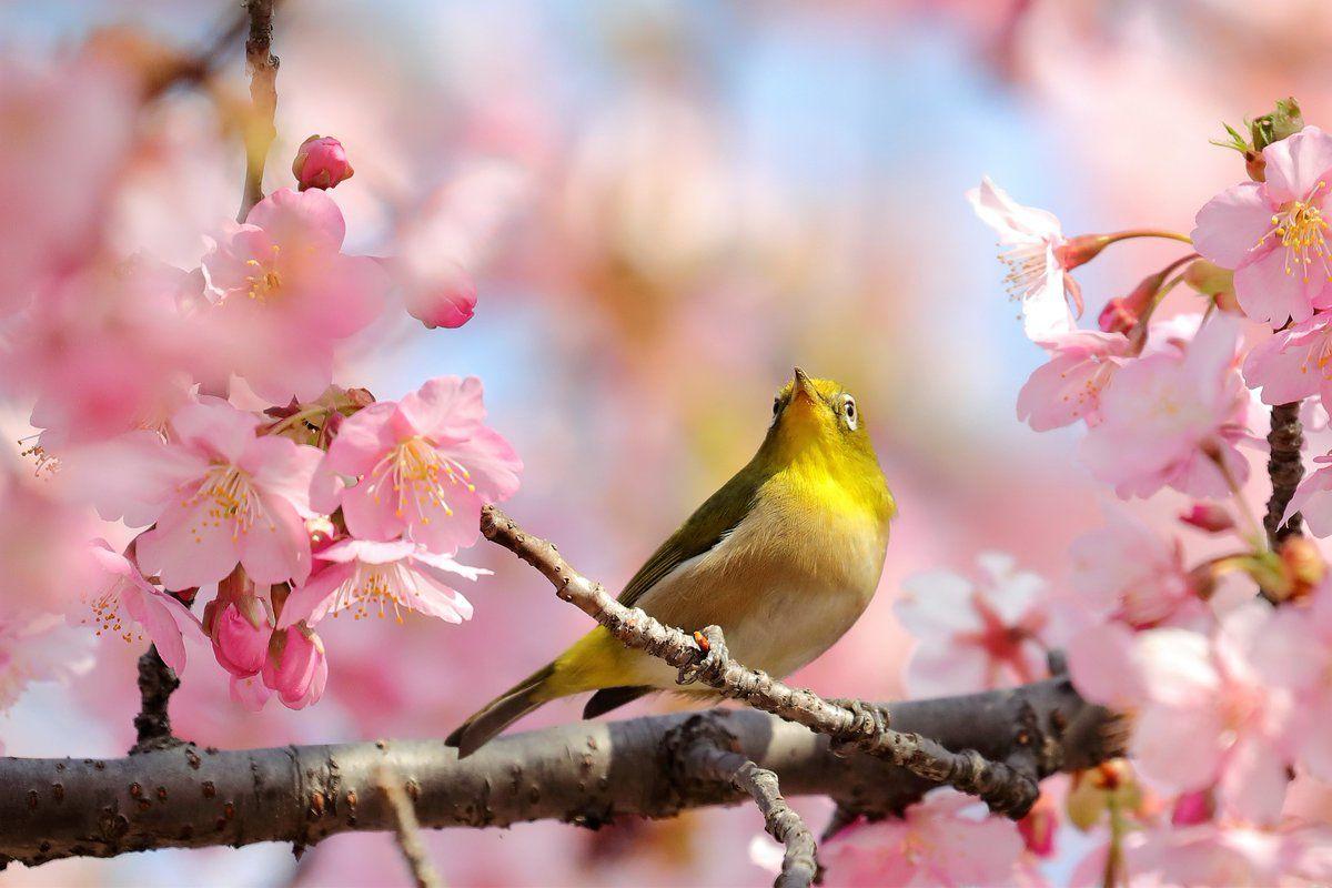 (1) Twitter Outdoor decor, Birds, Outdoor