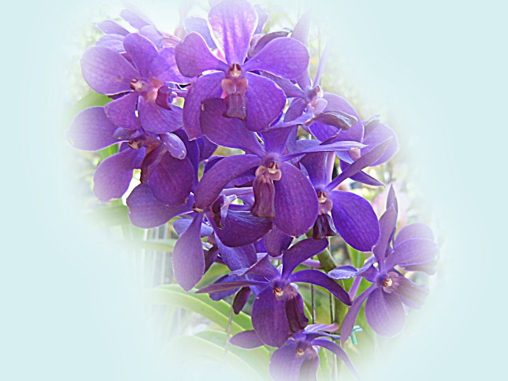 Pin Black Orchids Happy Birthday Flower On Pinterest