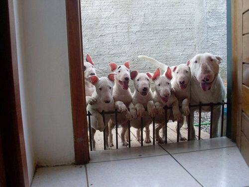 """naturesdoorways: """" thevegancheese: """" Look at all the babies!!!"""