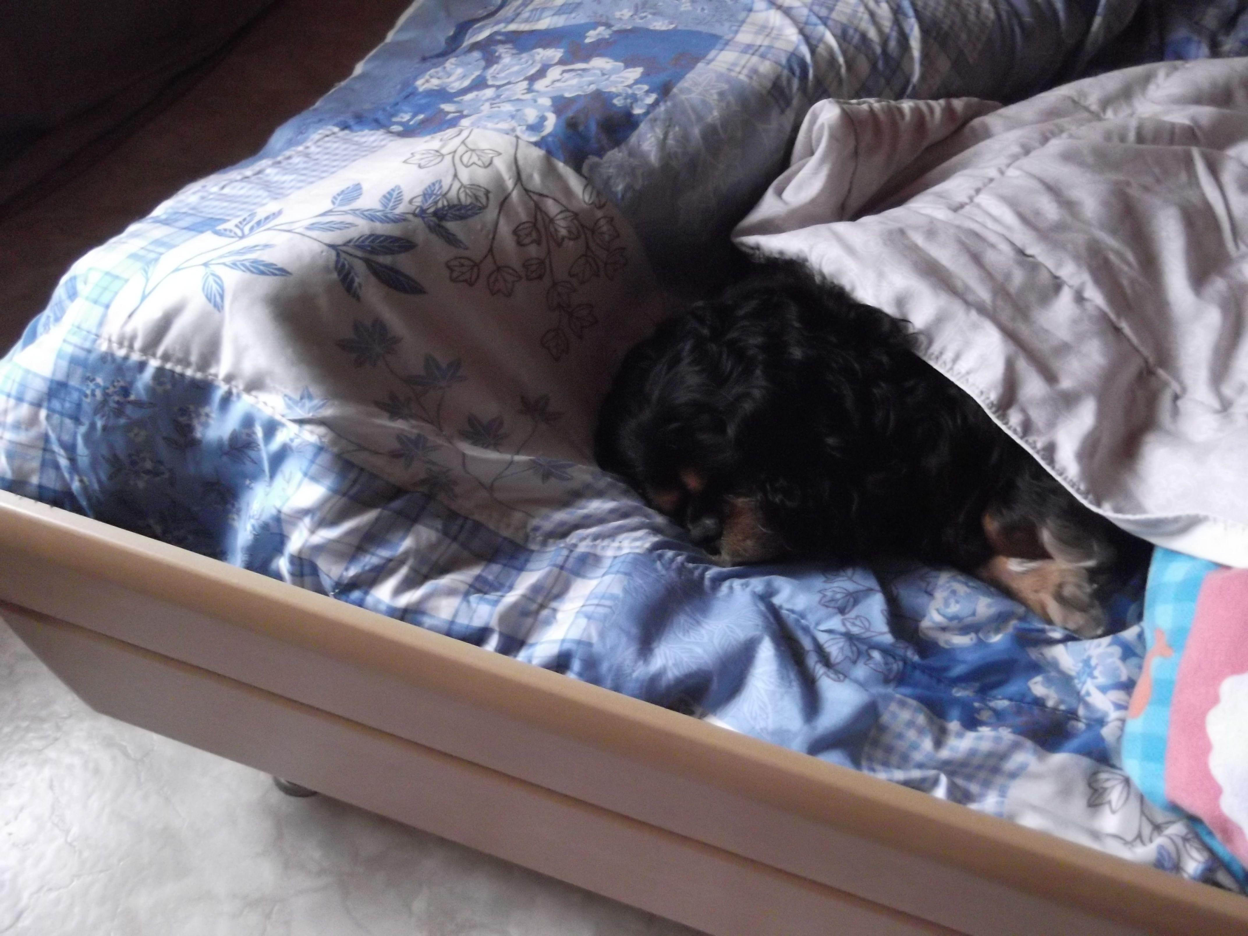 Beau : lekker uitslapen !