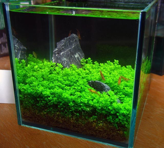 Don 39 t know how good of an idea this is but it 39 s really for Shrimp fish tank