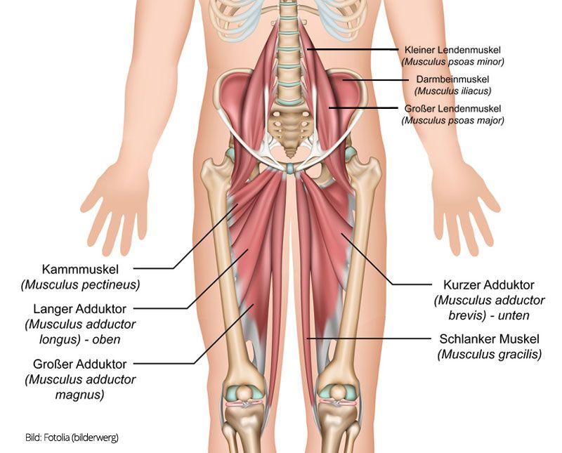 Anatomie Muskeln: Yoga-Übungen für offene Hüften | Gesundheit ...