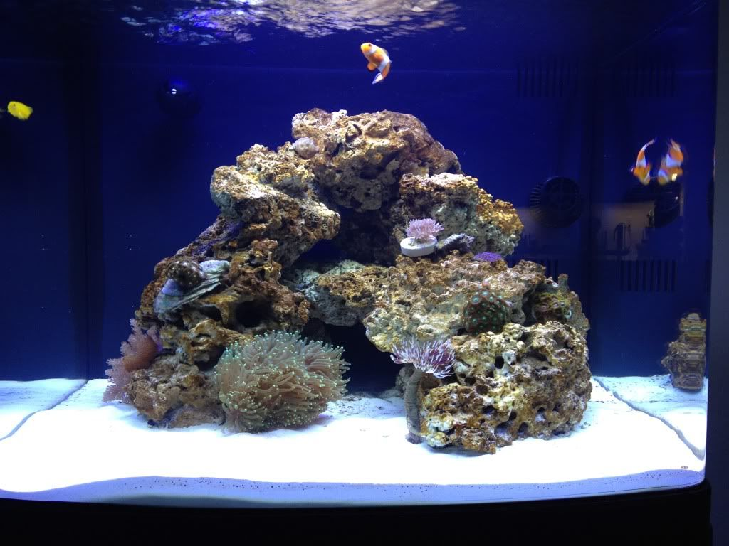 Fragrock S Biocube 29g Build All In One Tanks Nano Reef Com Community Reef Aquascaping Saltwater Tank Reef Tank Aquascaping