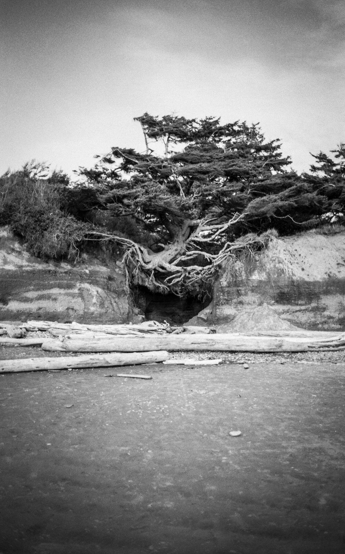 Tree Of Life Black And White Fine Art Print Landscape Photography Landscape Photography Fine Art Landscape