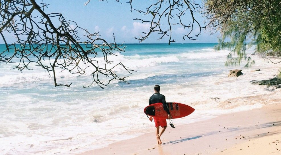 Warm waters, coral reefs and turtles - Barbados