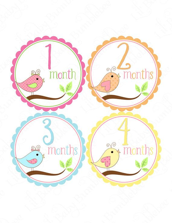 Monthly Baby Stickers Girls Monthly by LittleBabyBumblebee on Etsy, $9.00