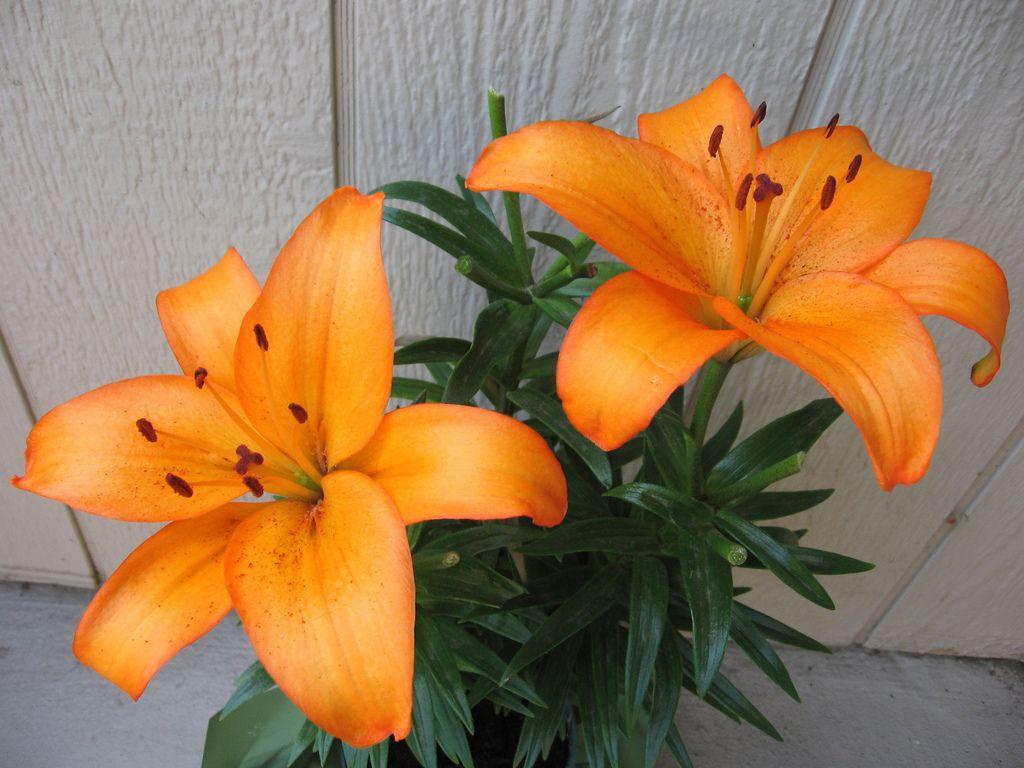 Favorite flowers ever!