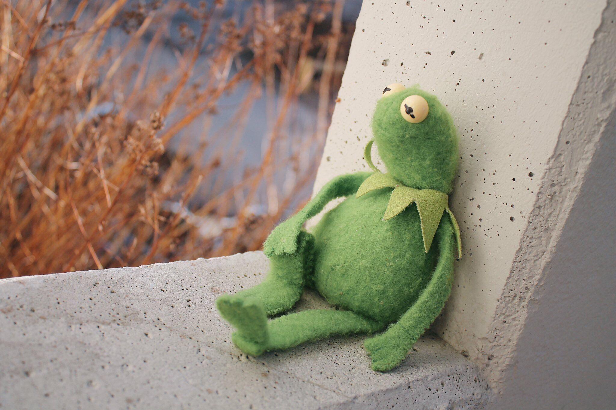 Pin De Ehab Taha Em Cute Frog Memes 1 1 Sapo Meme Rostos De Meme Sapos Engracados
