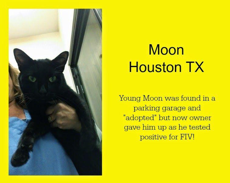 91514 adopted yay animal shelter adoption adoption