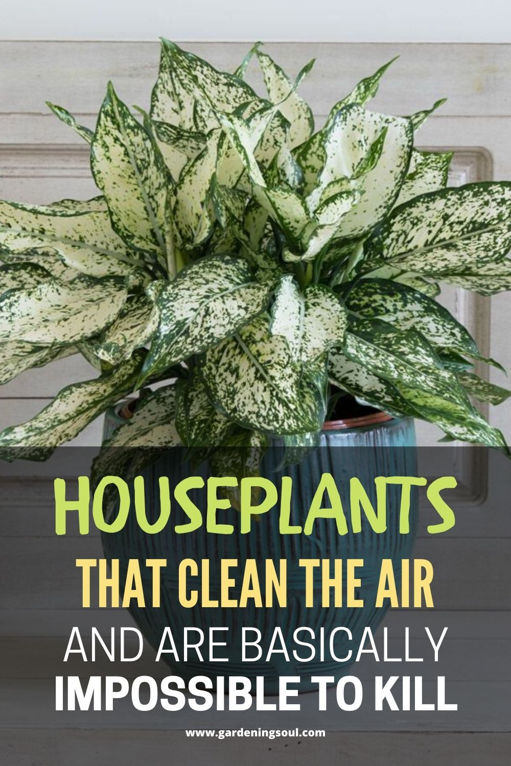 Houseplants That Clean The Air And Are Basically Impossible To Kill