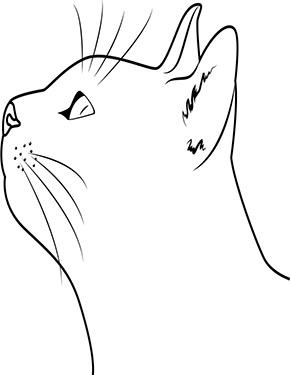 Pin Auf Ausmalbilder Katzen