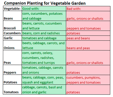 The Basics Of Companion Planting In A Vegetable Garden from Old ...
