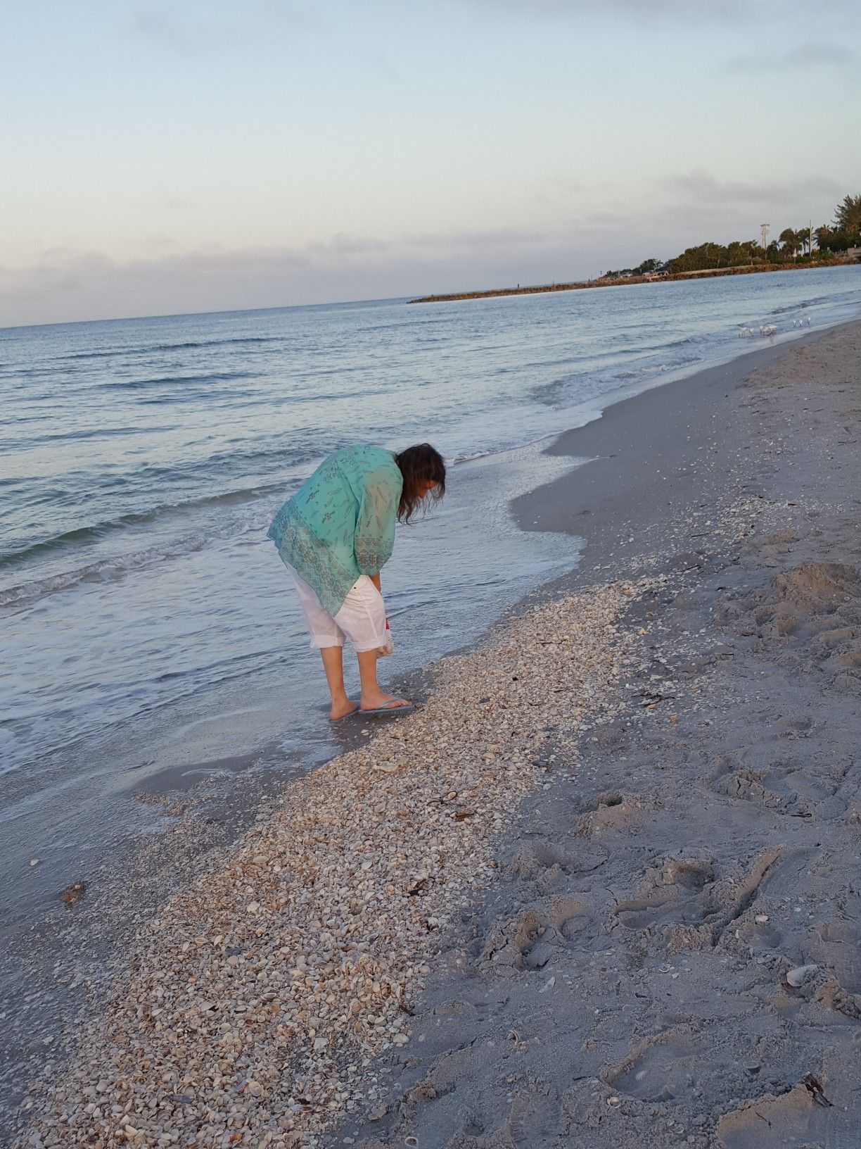 Doing The Sanibel Stoop Shelling At Blind P Beach Island Florida 11 12 17 Photo Taken By Jeff Welsh