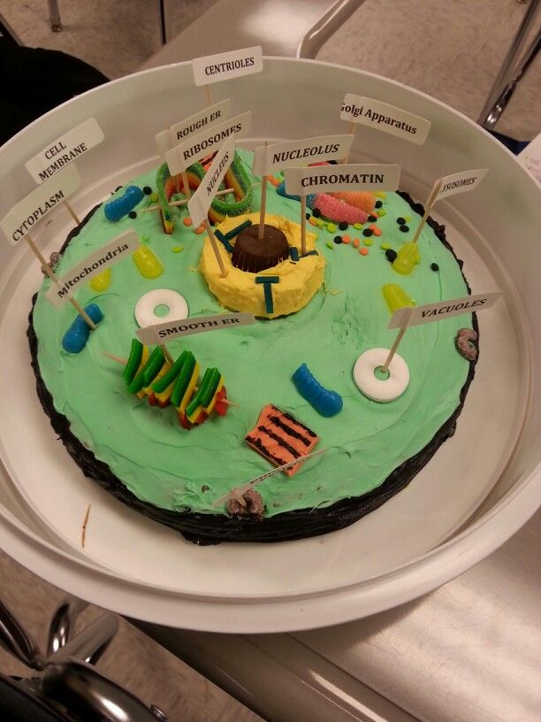 Animal Cell Cake Project Easy And A Affordable With Images