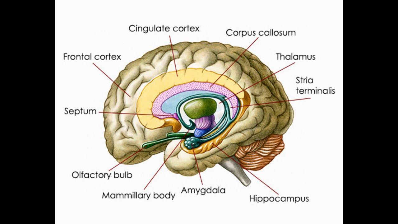 John Lamb Lash - HEAD SHOCK Mandela Effect Warning About the Brain ...